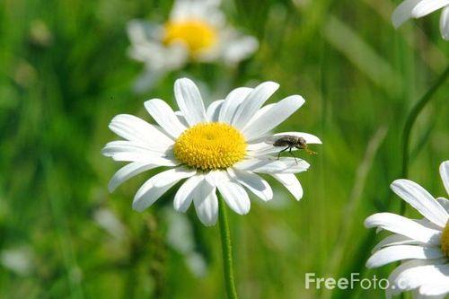 15_05_16---Daisy_web